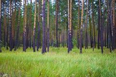 Foresta di Tambov Fotografie Stock