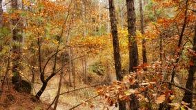 Foresta di Torregassa fotografia stock