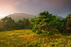 Foresta di tramonto Fotografie Stock