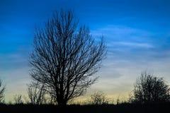Foresta di tramonto Fotografie Stock Libere da Diritti