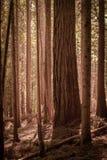 Foresta di vecchio sviluppo Immagini Stock Libere da Diritti