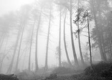 Foresta di verde della montagna della nebbia Fotografia Stock