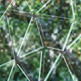 Foresta dietro il vetro rotto Fotografia Stock