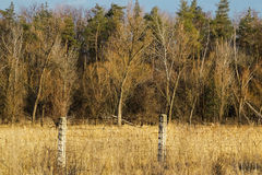 Foresta dietro un recinto del filo spinato Fotografie Stock