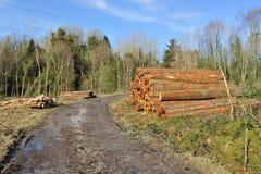 Foresta distrussa Immagine Stock Libera da Diritti