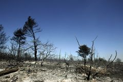 Foresta dopo fuoco Immagini Stock Libere da Diritti