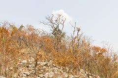 Foresta dopo fuoco su una montagna Immagine Stock Libera da Diritti