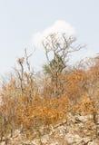 Foresta dopo fuoco su una montagna Fotografie Stock
