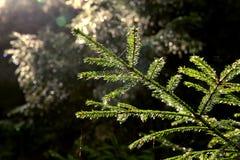 Foresta dopo la pioggia immagine stock