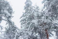 Foresta dopo le precipitazioni nevose fotografia stock