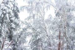 Foresta dopo le precipitazioni nevose immagine stock