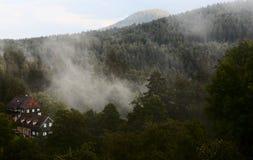 Foresta dopo pioggia Immagini Stock