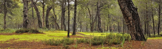 Foresta dopo pioggia Fotografia Stock Libera da Diritti