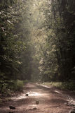 Foresta dopo pioggia Fotografie Stock