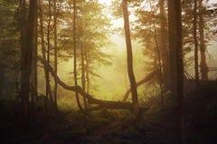 Foresta dorata Fotografia Stock Libera da Diritti