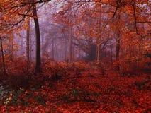 Foresta dorata Fotografia Stock