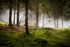 Foresta drammatica con nebbia Immagini Stock Libere da Diritti