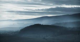 Foresta drammatica della montagna nebbiosa all'alba Immagine Stock Libera da Diritti