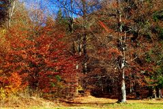 Foresta drammatica di autunno fotografia stock libera da diritti