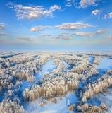 Foresta durante il giorno di inverno freddo Immagini Stock