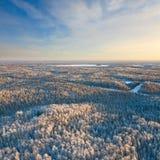Foresta durante il giorno di inverno freddo, vista superiore Fotografia Stock