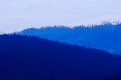 Foresta durante il tramonto Fotografie Stock Libere da Diritti