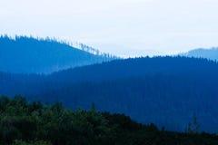 Foresta durante il tramonto Fotografie Stock