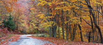 Foresta durante l'autunno Fotografie Stock Libere da Diritti