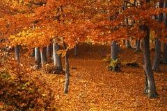 Foresta durante l'autunno Immagini Stock Libere da Diritti