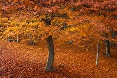 Foresta durante l'autunno Fotografie Stock