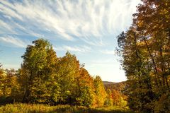Foresta durante la caduta 2 Fotografie Stock