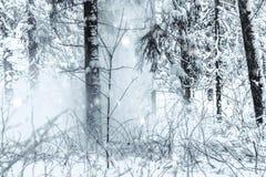 Foresta durante le grandi precipitazioni nevose fotografie stock