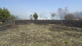 Foresta e campo bruciati dopo l'incendio violento, terra nera, ceneri, fumo, tempo pericoloso del progetto, catastrofe ecologica video d archivio