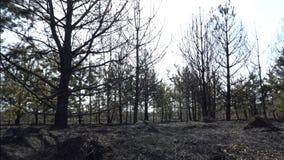 Foresta e campo bruciati dopo l'incendio violento, terra nera, ceneri, fumo, tempo pericoloso del progetto, catastrofe ecologica archivi video