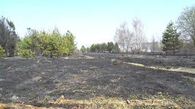 Foresta e campo bruciati dopo l'incendio violento, terra nera, ceneri, fumo, tempo pericoloso del progetto, catastrofe ecologica stock footage