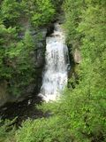 Foresta e cascate Fotografie Stock