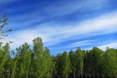 Foresta e cielo Fotografie Stock Libere da Diritti