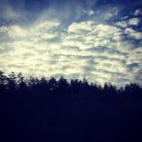 Foresta e cielo Fotografia Stock Libera da Diritti