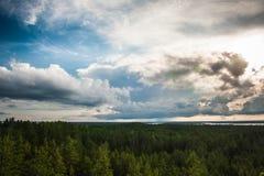 Foresta e cielo Fotografie Stock