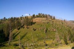 Foresta e colline del Yellowstone Fotografia Stock Libera da Diritti