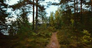 Foresta e conifere nel Nord Paesaggio russo con i pini ed abete, giorno soleggiato in natura selvaggia Fuco aereo archivi video