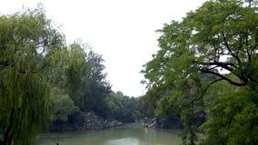 Foresta e fiume Fotografia Stock Libera da Diritti