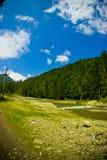 Foresta e fiume fotografie stock