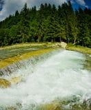 Foresta e fiume fotografia stock