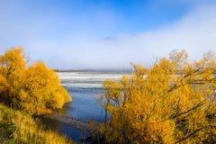 Foresta e fiume gialli in montagne della Nuova Zelanda Fotografia Stock