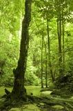 Foresta e flusso verdi Fotografia Stock Libera da Diritti