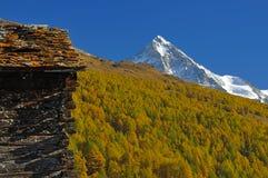 picchi di montagna e foresta del larice fotografia stock
