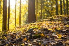 Foresta e giorno soleggiato Fotografia Stock Libera da Diritti