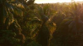 Foresta e giungla della palma nei raggi del sole luminoso di tramonto foresta pluviale delle inondazioni di luce solare archivi video