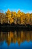 Foresta e la sua riflessione Fotografia Stock Libera da Diritti
